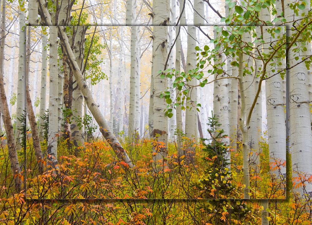 Aspen Pastel 3 D Photography Art | Whispering Impressions