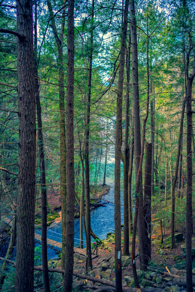 Enchanted Forest Photography Art | draphotography