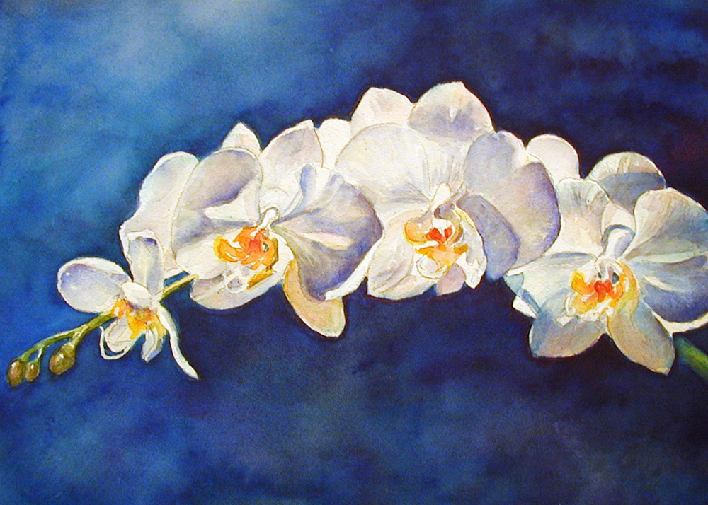 White Phal, From an Original Watercolor Painting