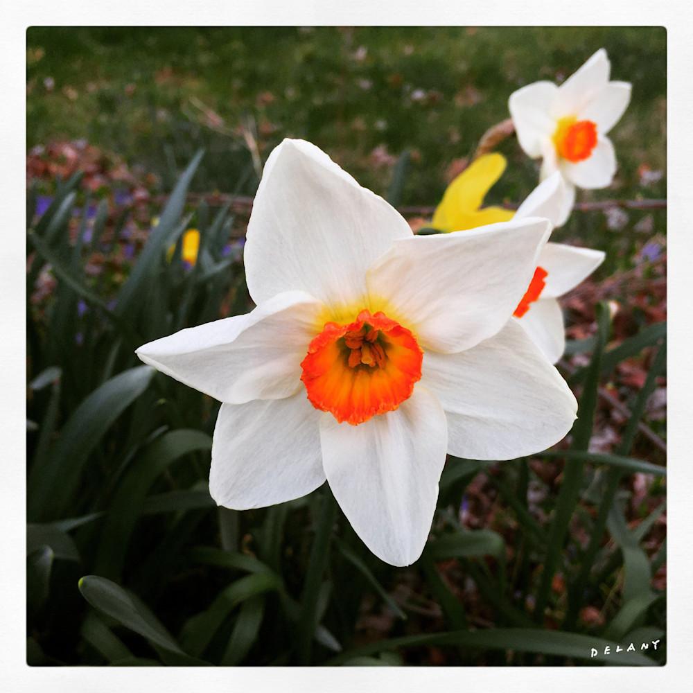 Spring Narcissus Instagram 2 Print