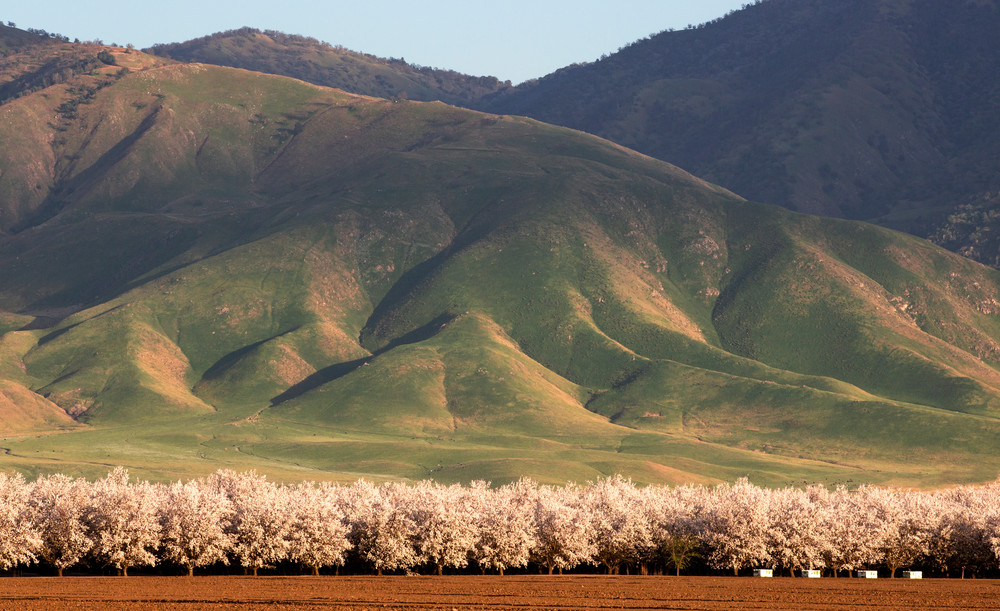 Almond Blossom Valley Photography Art | Josh Kimball Photography