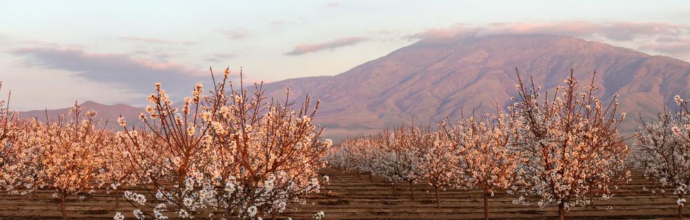 Blooming San Joaquin Photography Art | Josh Kimball Photography