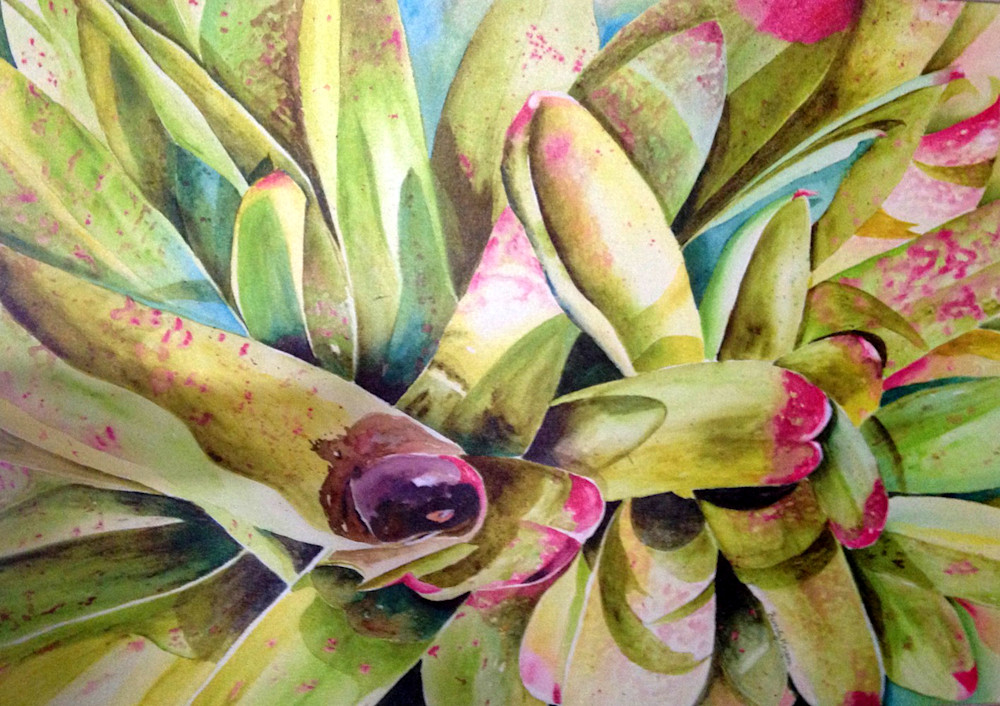 Bromeliads, From an Original Watercolor Painting