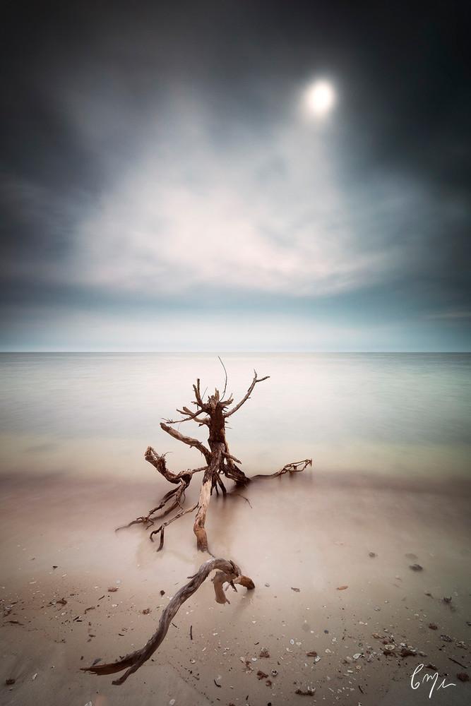 Constance Mier fine art photographer - Everglades prints