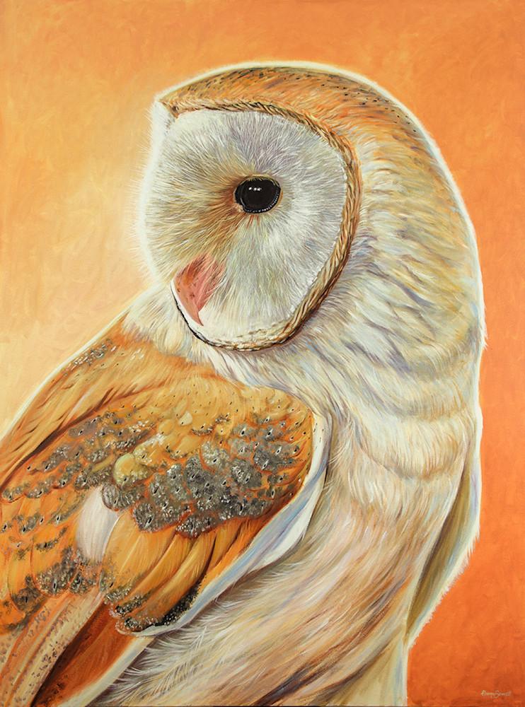 Bella - Barn Owl