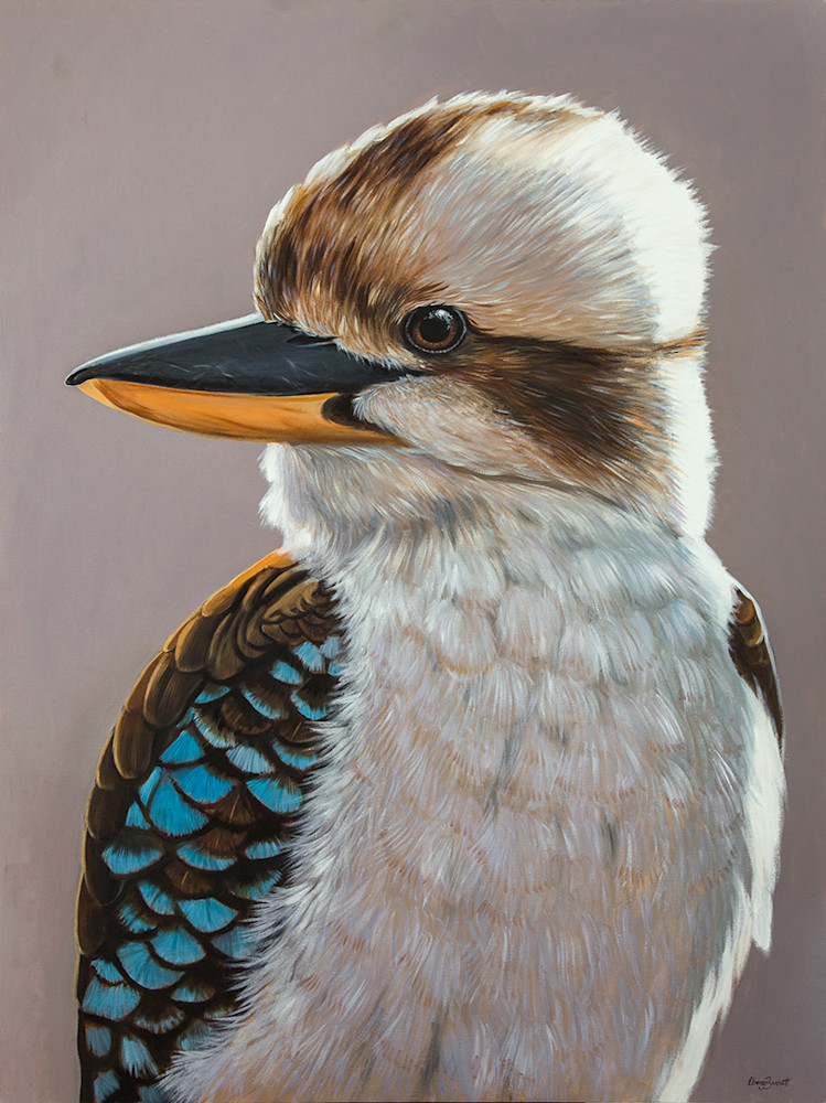Harry - Kookaburra