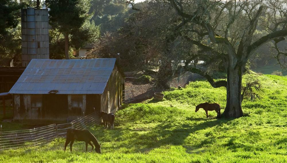 Bucolic Valley Afternoon Photography Art | Josh Kimball Photography