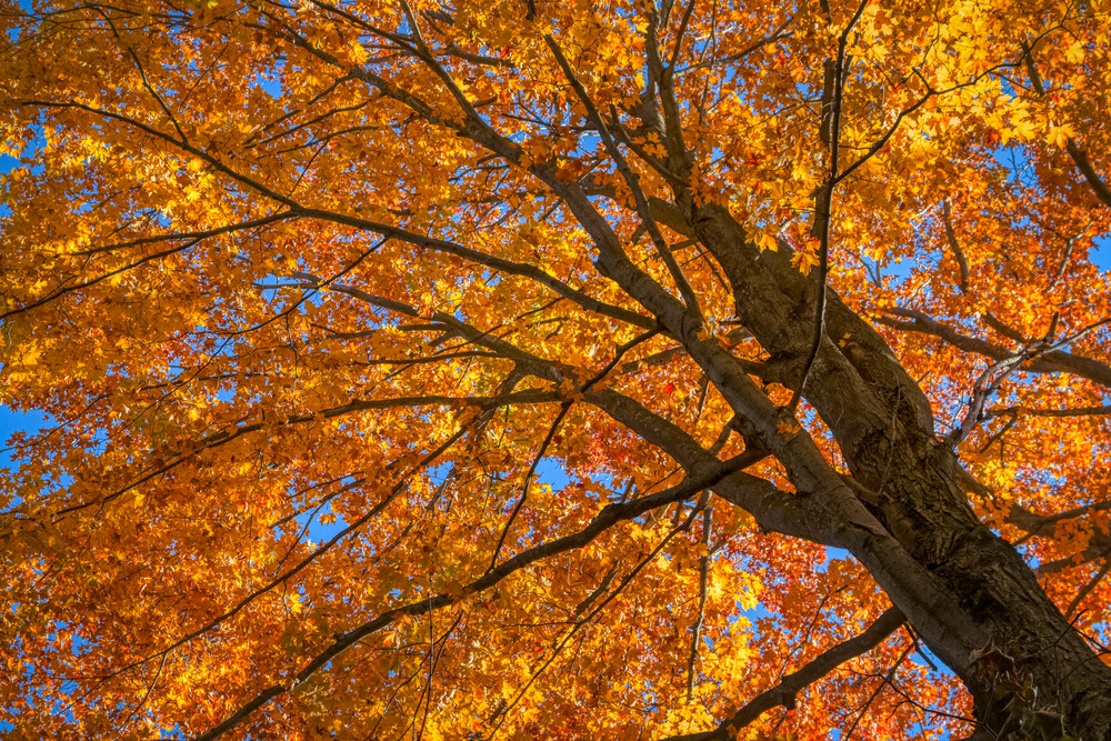 Fall Colors Photography Art   FocusPro Services, Inc.