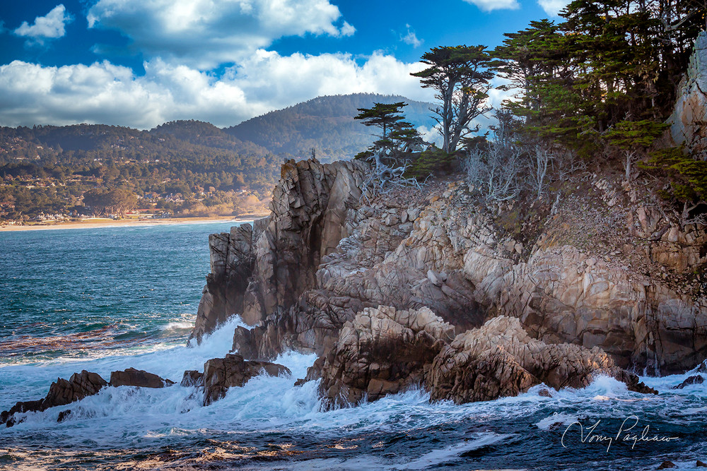 Point Lobos Art | Tony Pagliaro Gallery