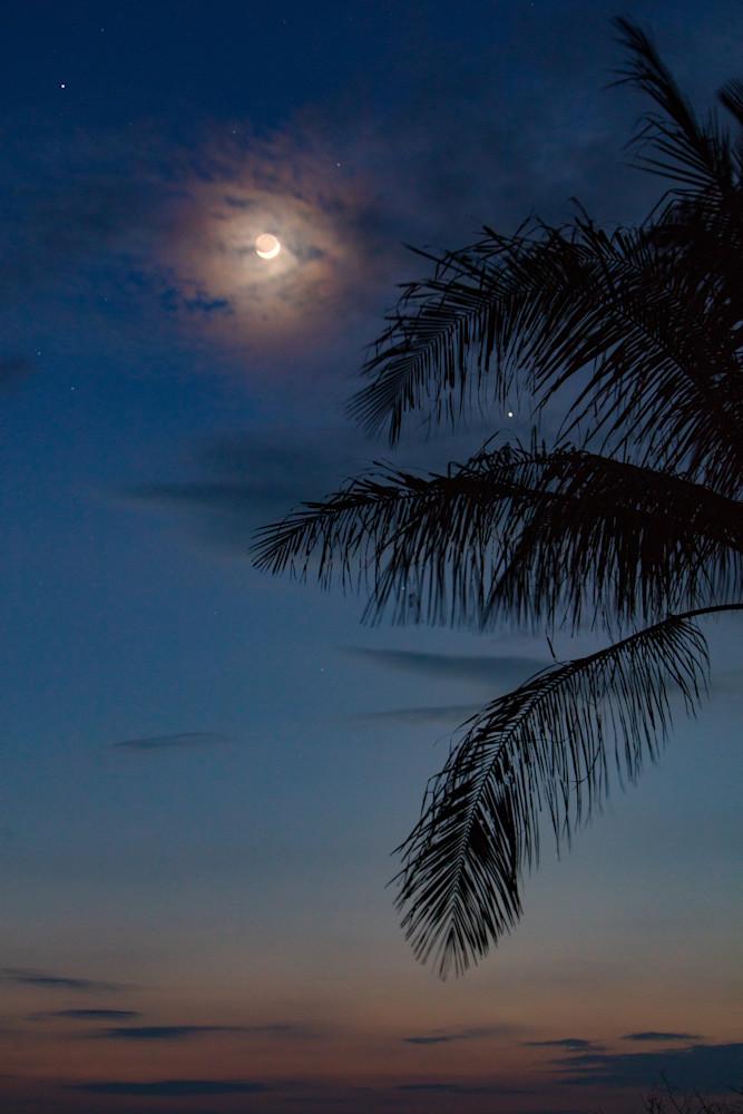 moon, palm tree, stars