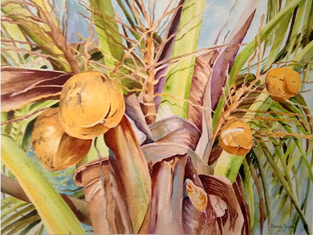 Coconut Crown, From an Original Watercolor Painting