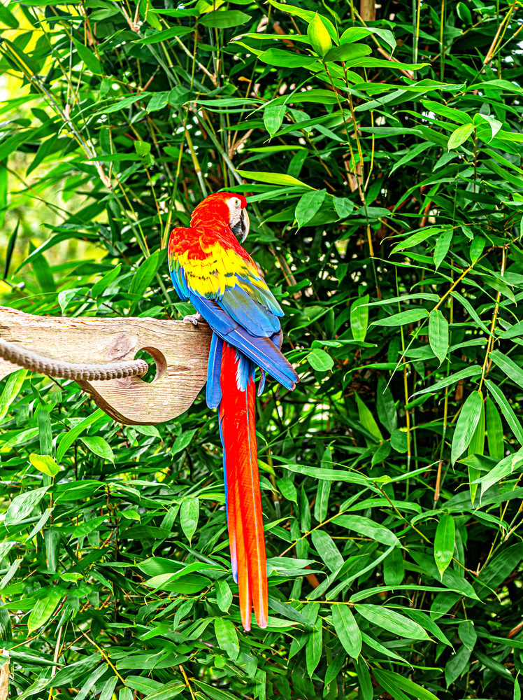 Cold Shoulder Parrot Photography Art | draphotography