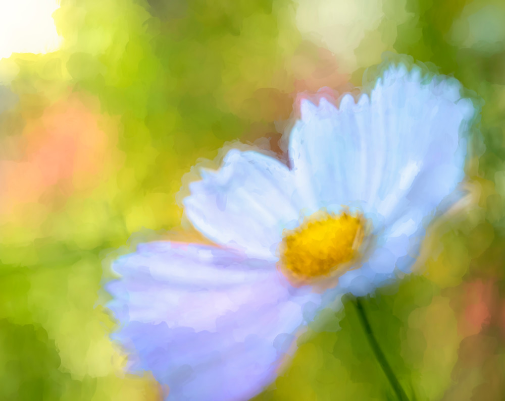 Cosmos Impressions Floral Fine Art