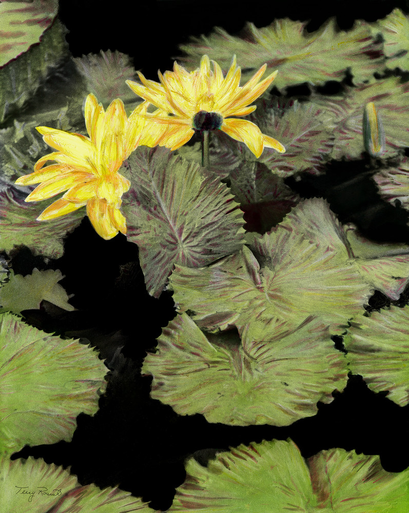 Water Lilies and Lily Pads by Terry Rosiak