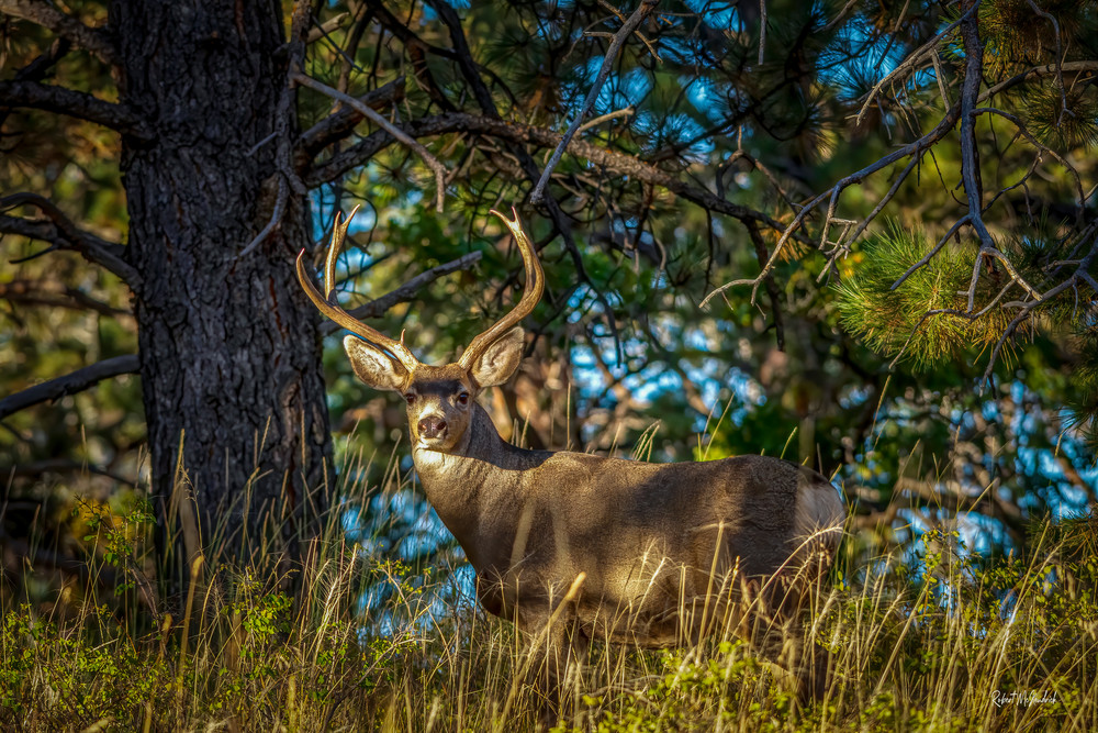 In The Shadows Photography Art | McKendrick Photography