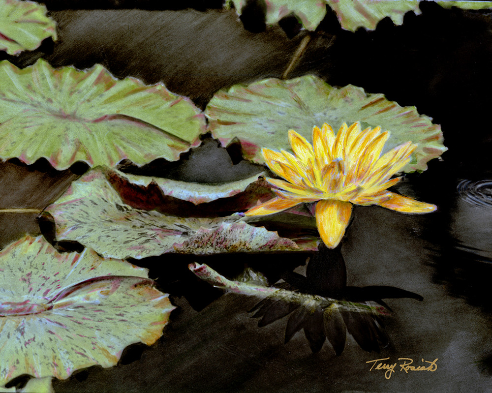 Hand Painted Water Lily by Terry Rosiak