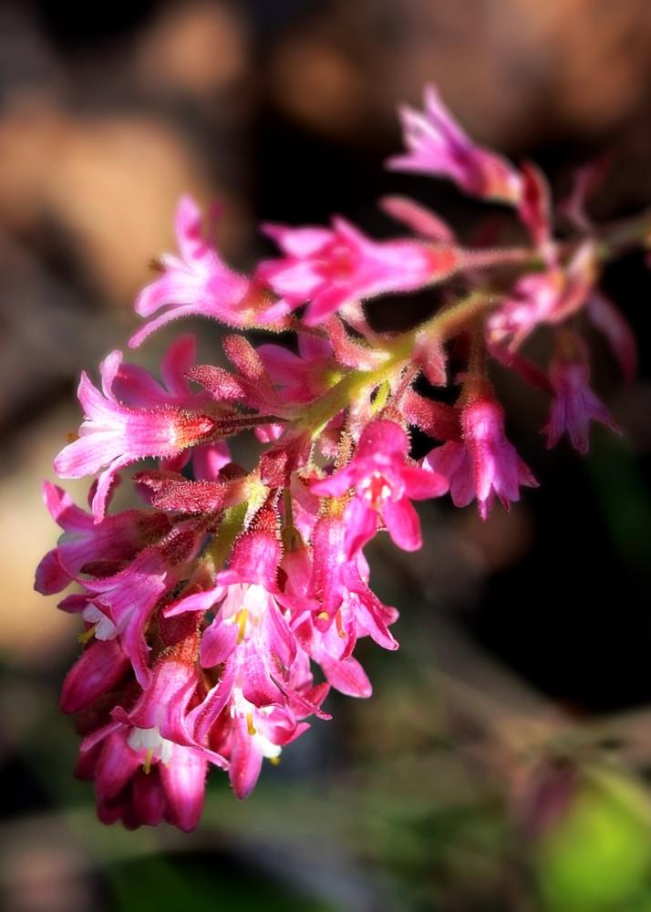Wild Flower In Pink Art | KAT MILLER-PHOTO ARTIST
