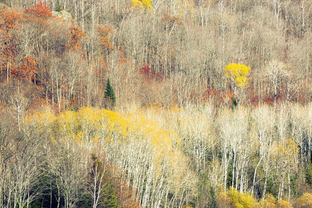 Ontario Fall Study1 Photography Art | Robert Leaper Photography