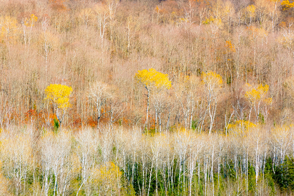 Ontario Fall Study2 Photography Art | Robert Leaper Photography
