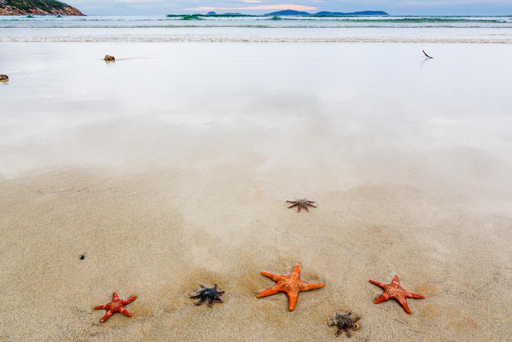 Starfish - Wilsons Promontory Park, Victoria, Australia, beach