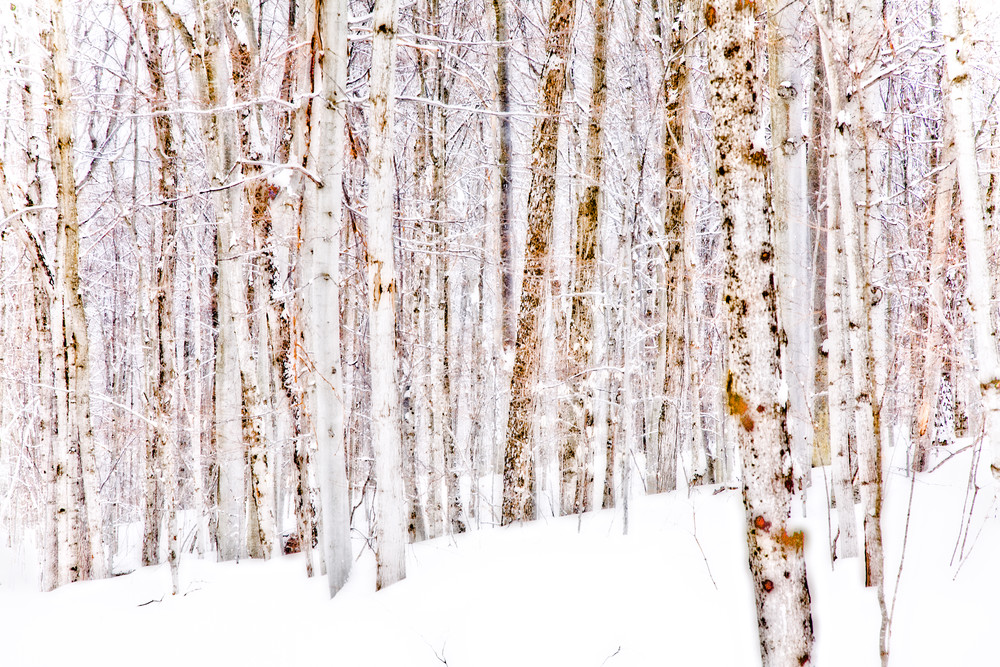 Winter Trees, Muskoka, Ontario, Canada