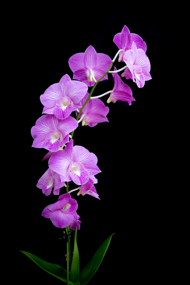 Vivid Purple Orchids Photography Art | Bird In Paradise