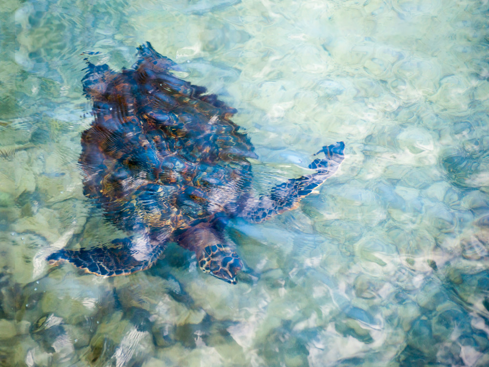 Watercolor Turtle Photography Art | Bird In Paradise