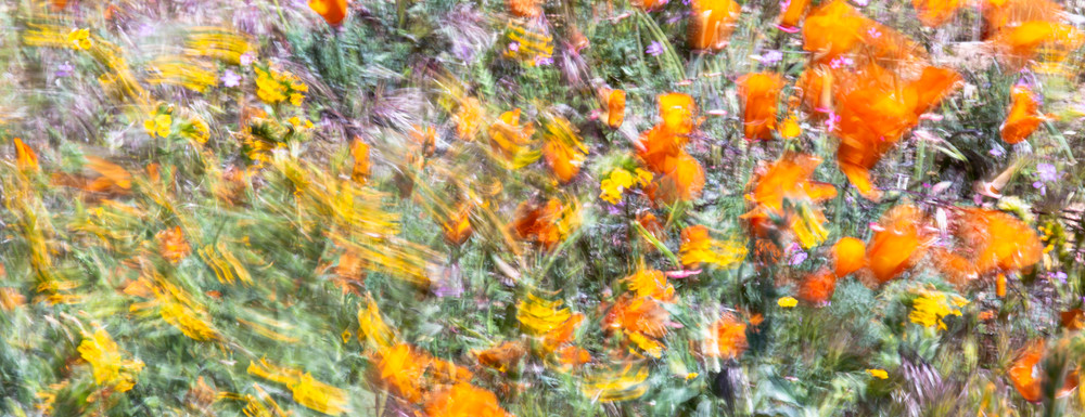 Floral Whirlwind Photography Art | Josh Kimball Photography
