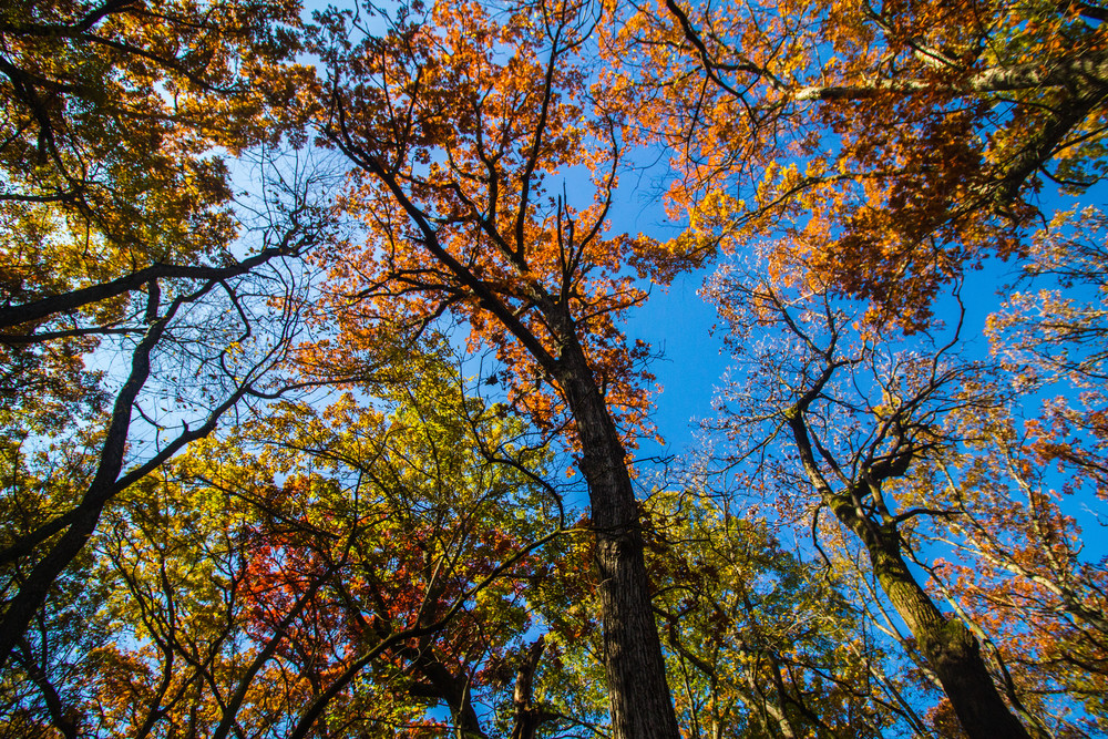Fall Colors Overhead Photography Art | Lake LIfe Images