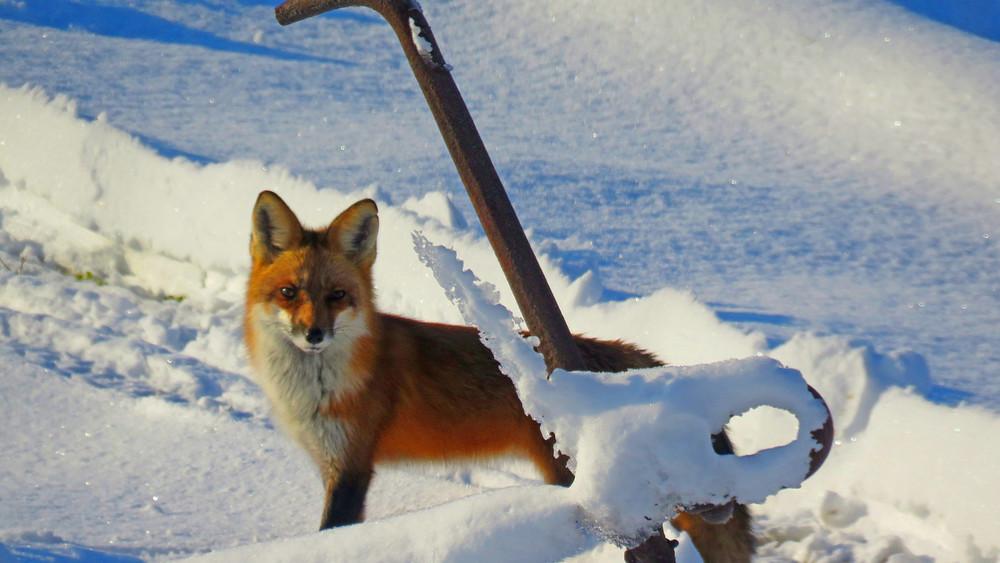 Fox Anchor Photography Art | Lake LIfe Images