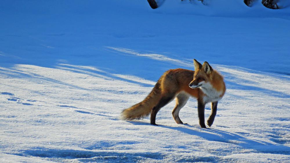 Foxy Photography Art | Lake LIfe Images