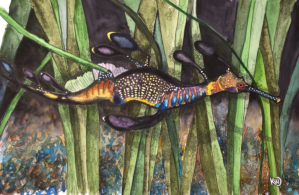 Leafy Sea Dragon 02 Art   Water+Ink Studios