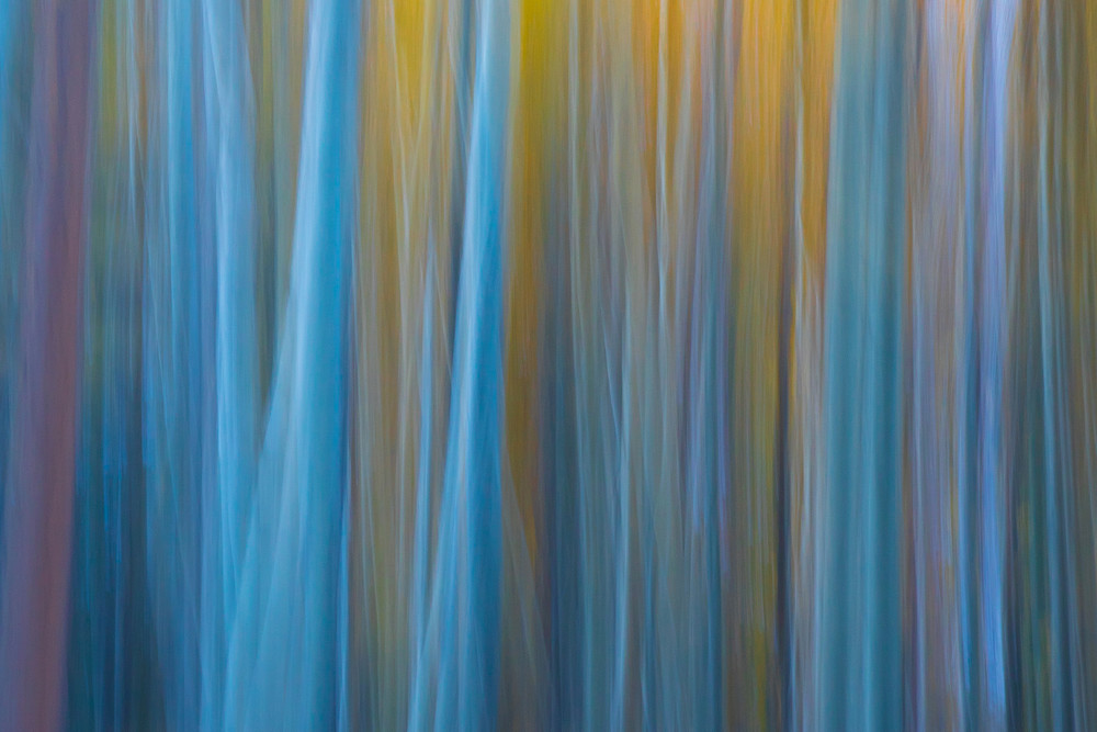 Abstract Aspens Photography Art   Leiken Photography