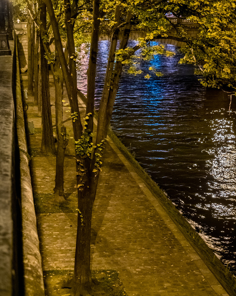 Trees On The Seine, Paris/sold by Ben Asen Photography