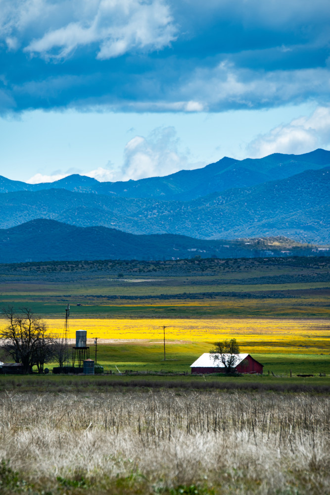 Ranch in Springtime is a fine art photograph of a barn surrounded by fields of yellow flowers available for sale.