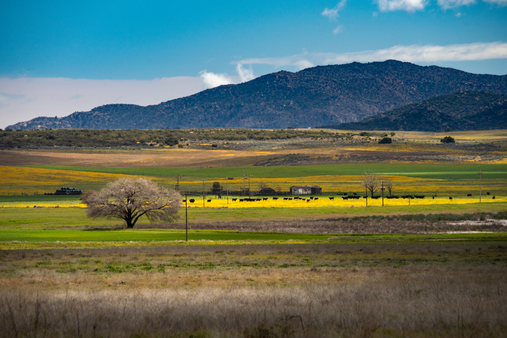 Meadows and Mountains is a fine art photograph available for sale.