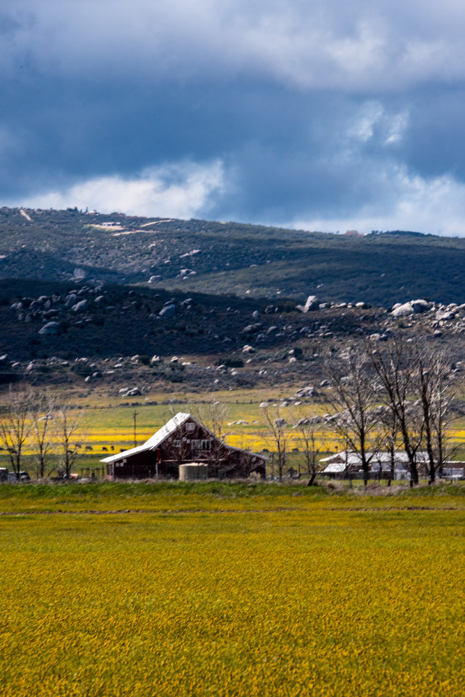 Barn and Flowers is a fine art photograph available for sale