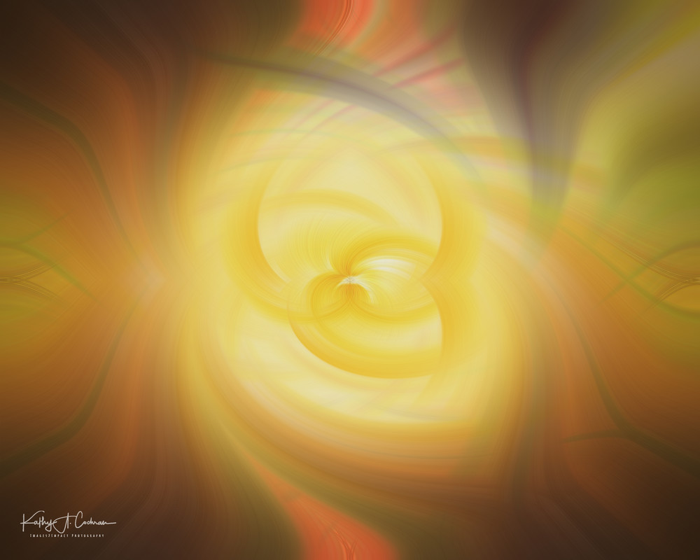 Sunlit Rose Twirl Photography Art | Images2Impact