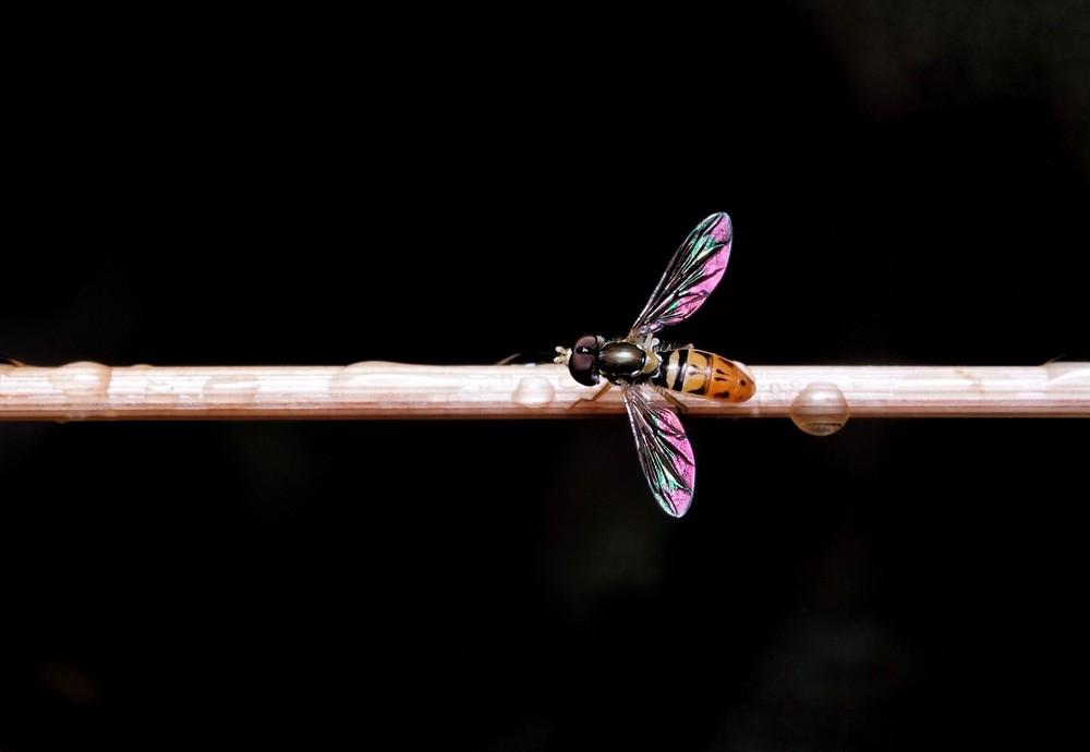 Stick Fly Art | Danny Johananoff