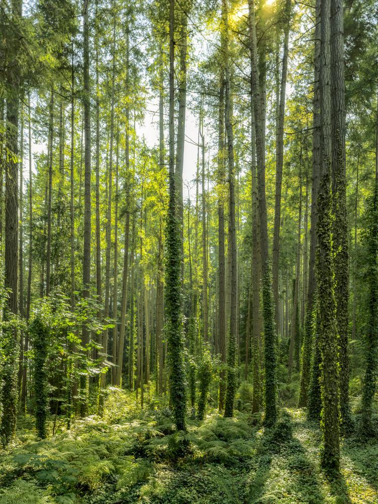 Vaulted Green Photography Art | James Alfred Friesen