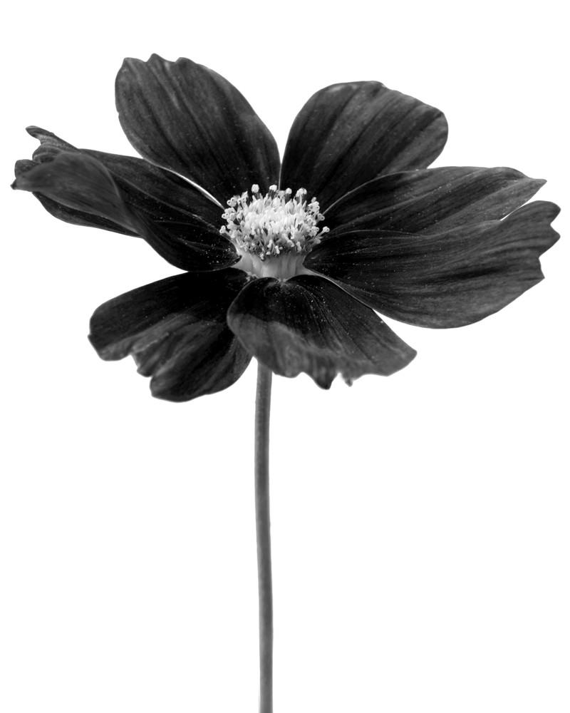 Botanical 11 Photography Art   MPF Gallery