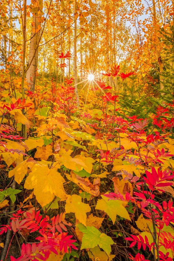 soapstone fall color