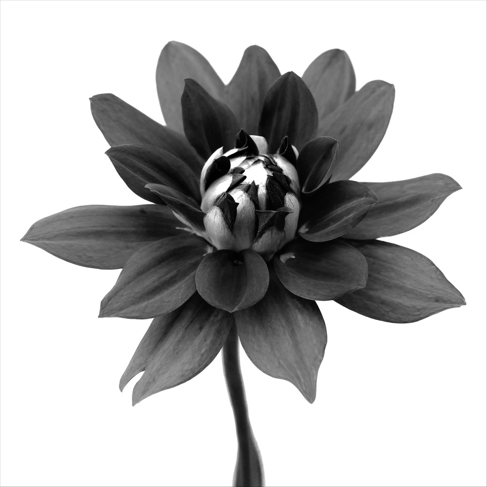 Botanical 12 Photography Art | MPF Gallery