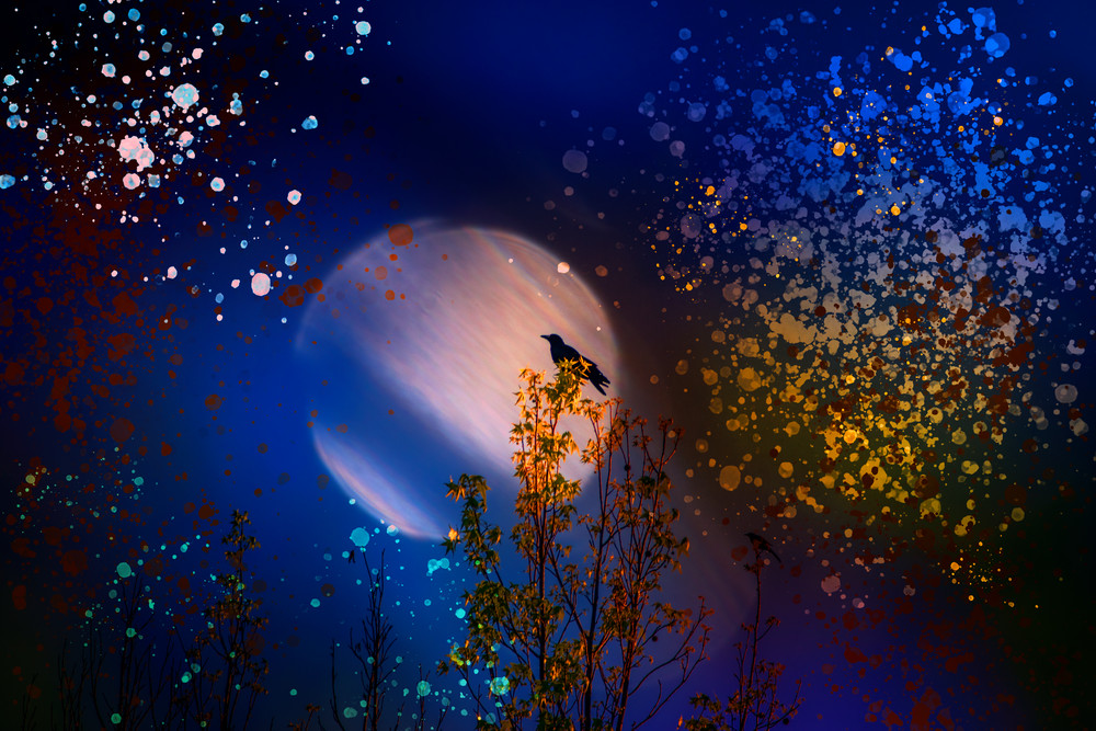 Bird Of Night Photography Art | draphotography