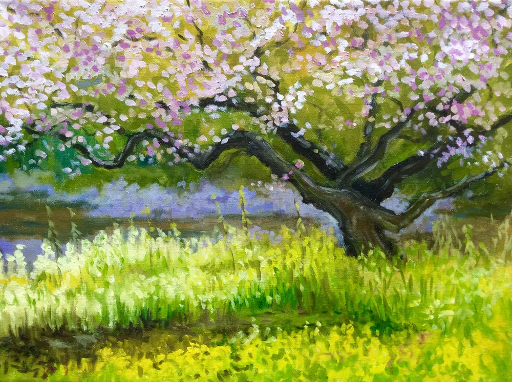 Cherry Blossoms and Spring Greens Framed Fine Art Print