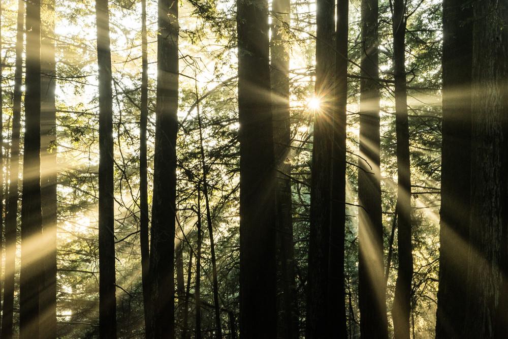 Angel Light - California forest landscape photograph print
