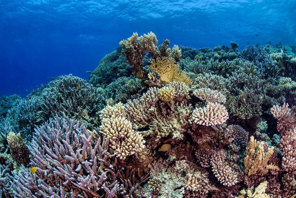 Reef of Hard Corals is a fine art photograph available for sale