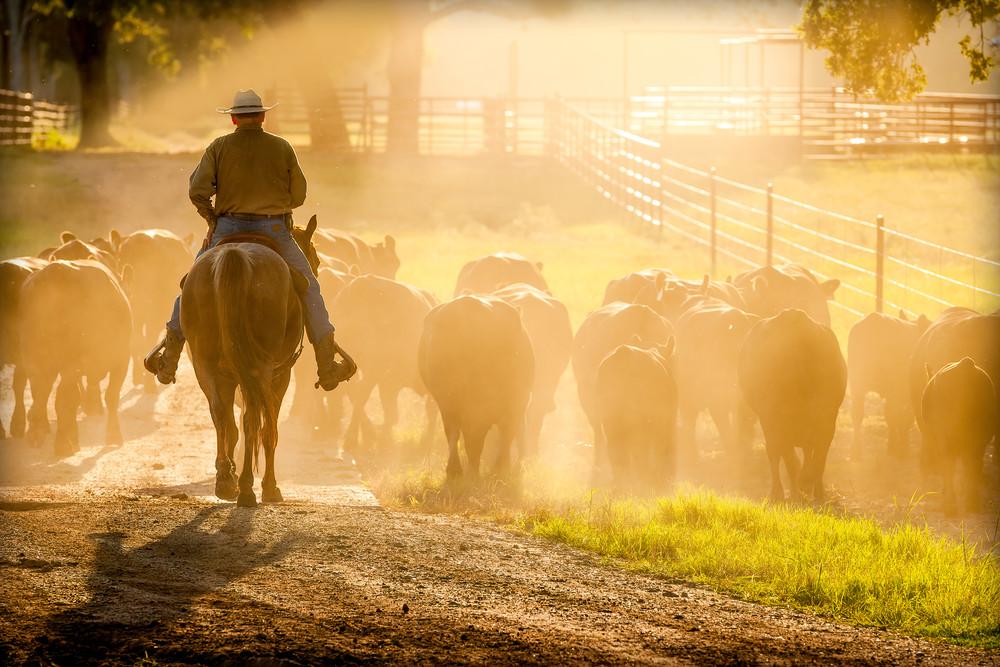 Cowboy On Horseback, Late Afternoon Sun