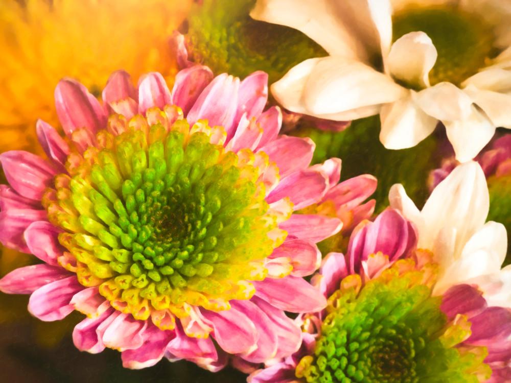 Spring Flowers Photography Art | Studio 221 Photography