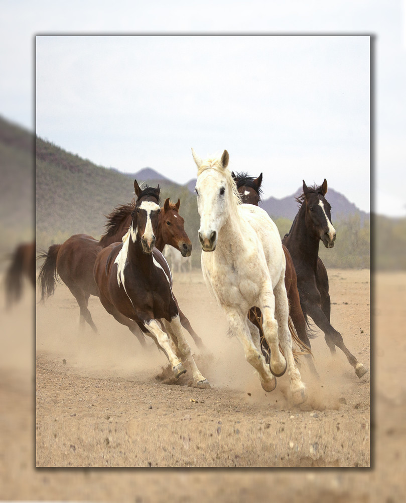 White Horse Run  V 3 D Photography Art | Whispering Impressions